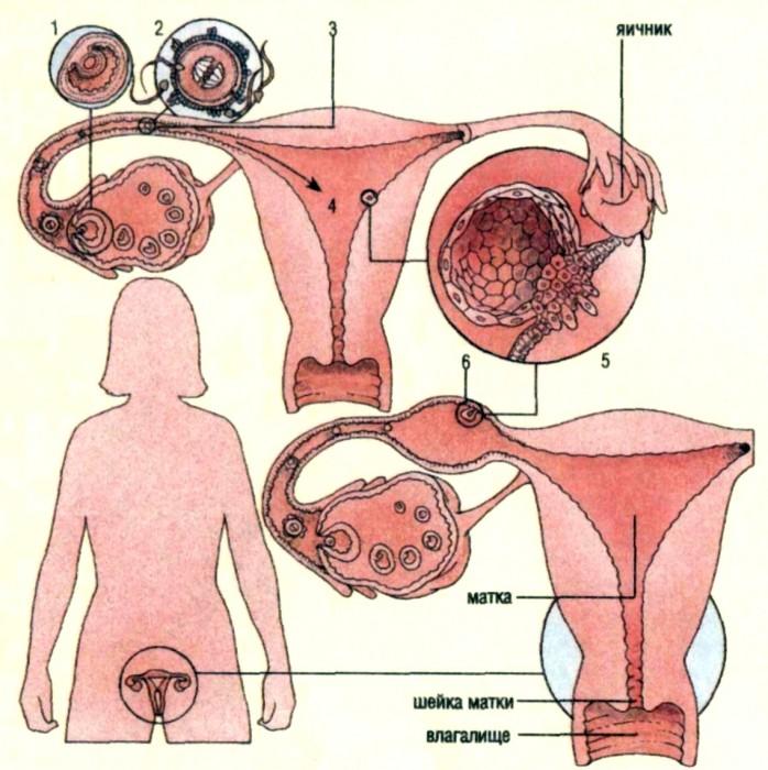 Внематочная беременность описание карты